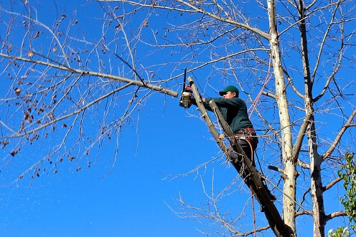 Tree Crown Reduction St George