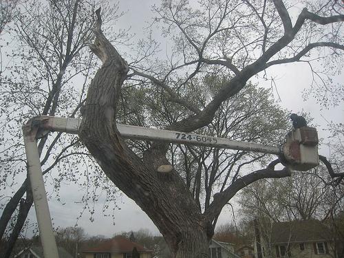 Tree Cutting Service Hartcliffe