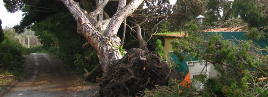 Tree Removal Clifton
