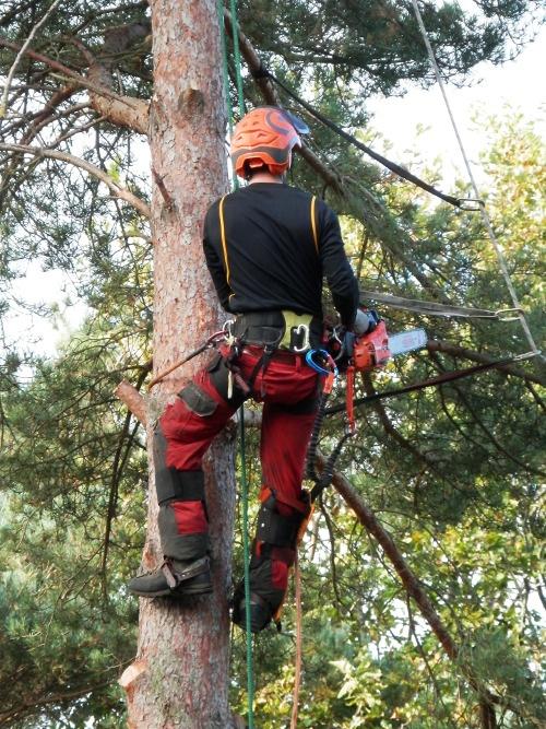 Tree Stump Removal Stoke Bishop